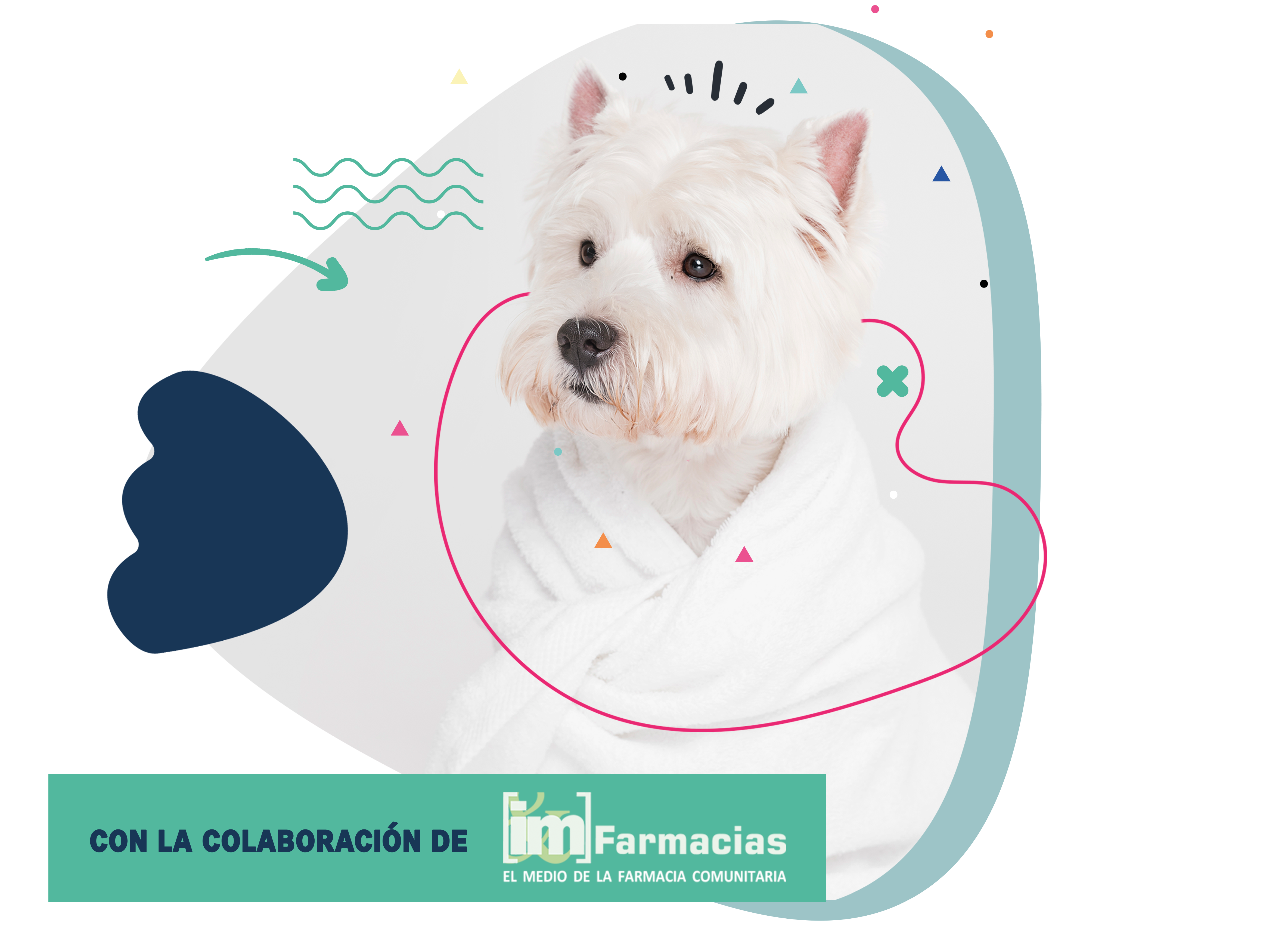 Veterinaria_COFARES_PERRO-4